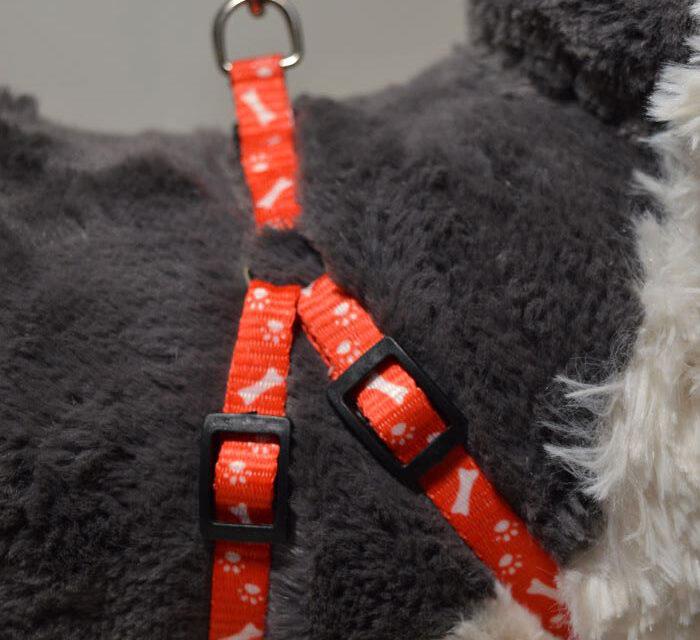 Piros csont mintás kutyahám pórázzal 1